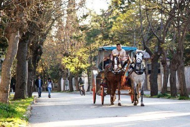 Устав от суеты Стамбула, можно съездить на пароме Принцевы острова